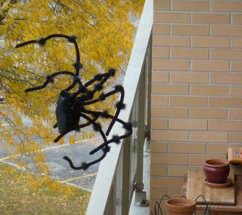 P1000872 spider infestation