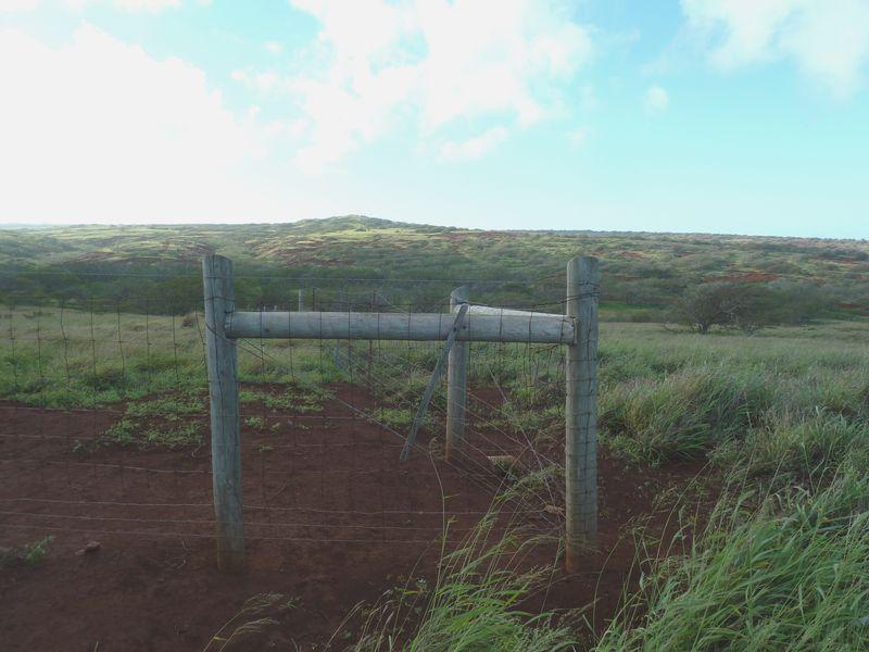 P1020019 Fence Corner