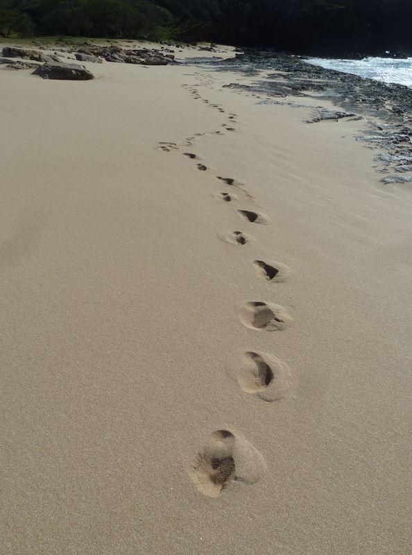 P1020048 walking on the beach