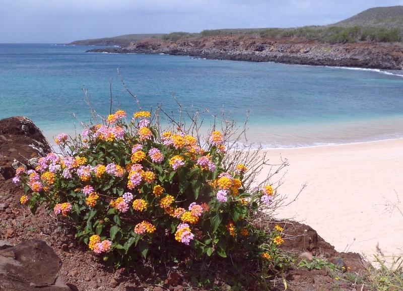 P1020154 Rocks, flowers, beach