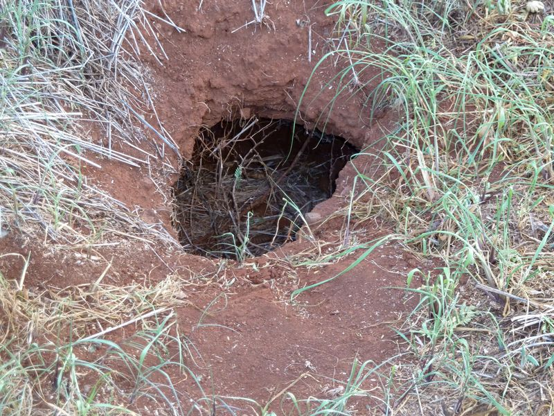 P1020006 Possible mongoose home