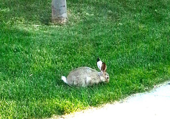 20130816_181830 bunny