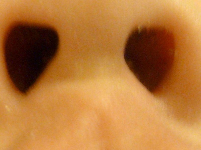 P1020678 heart-shaped nostrils