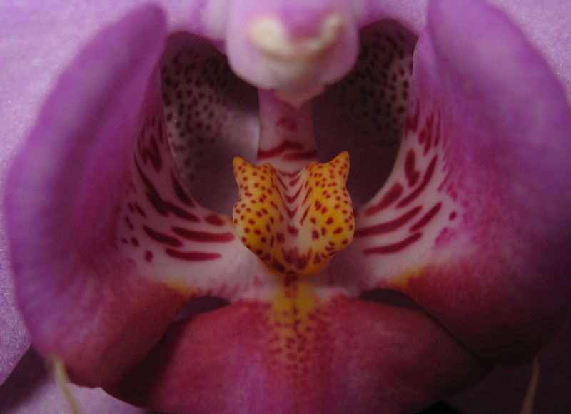 Orchid01_2