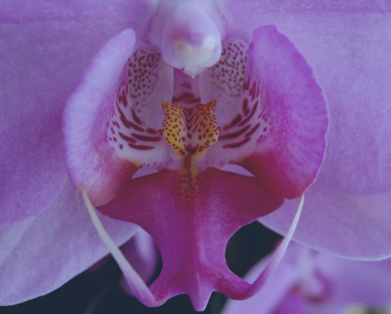 Orchid2a
